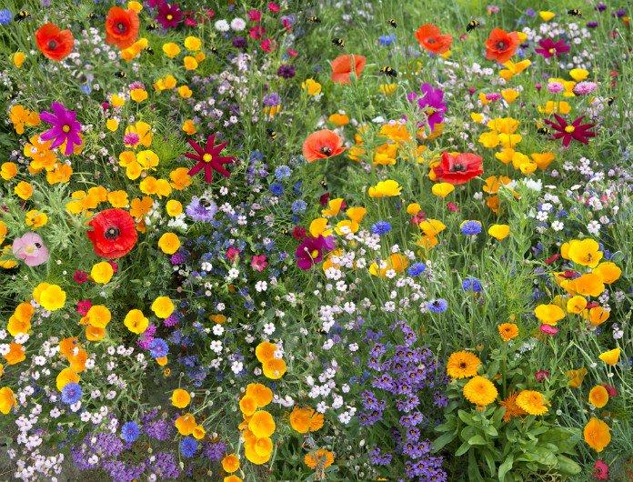 sauver-abeilles-jardin-fleurs-plantes-melliferes-24